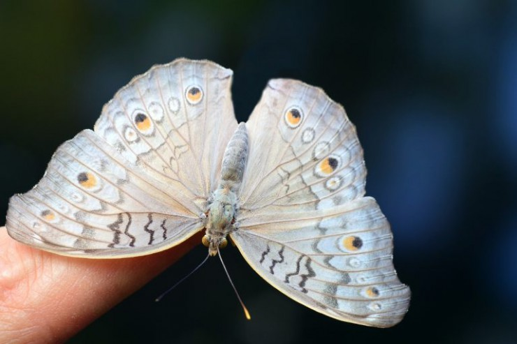 what-to-visit-in-krakow-butterfly