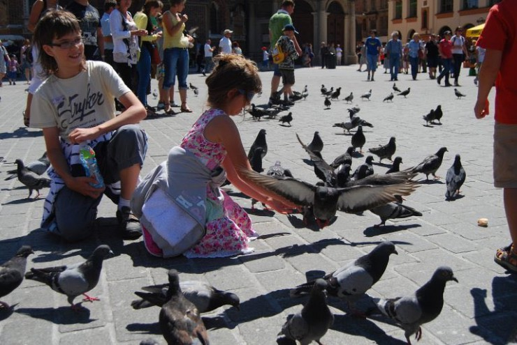 what-to-visit-in-krakow-pigeons