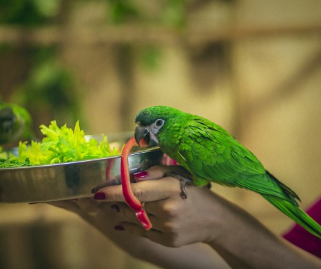 Parrots show Amazonia