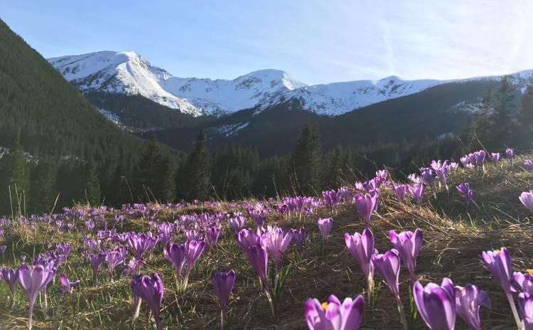 Tatra mountains Landscape